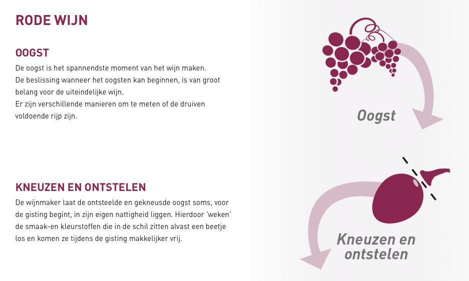 Zo wordt rode wijn gemaakt, uit de 'ik weet wat van wijn' e-learning